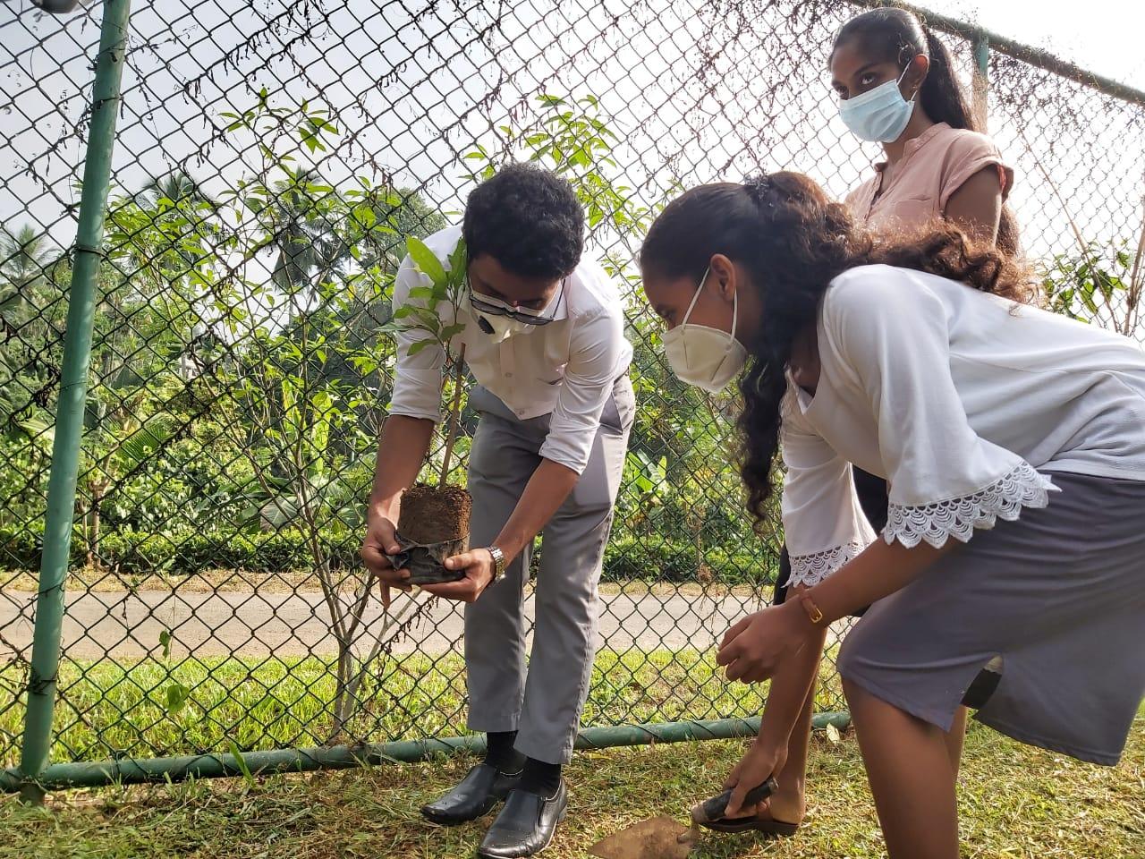 Tree-planting Campaign
